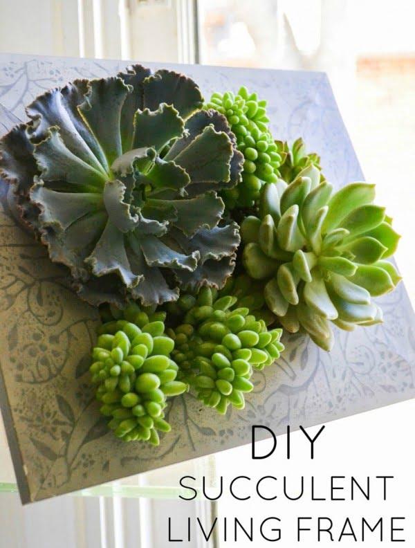 DIY Succulent Living Frame