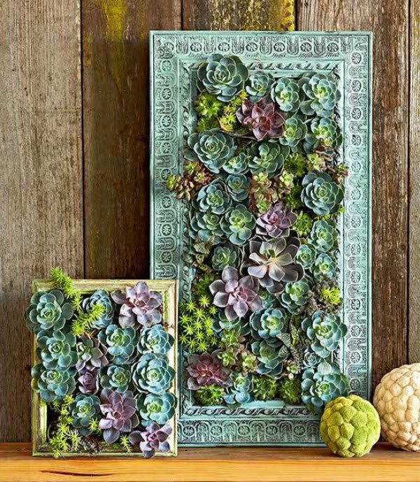 Small Apartment DIY: Succulent Wall Garden by BHG
