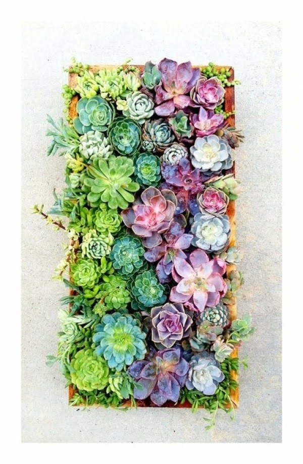 Living Artwork: How to Construct a Vertical Succulent Garden