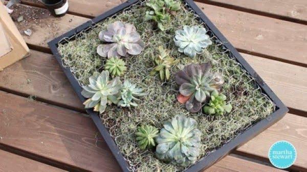 Create a DIY Succulent Wall Planter