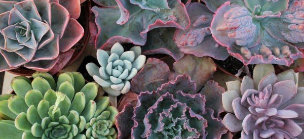 DIY Living Succulent Frame