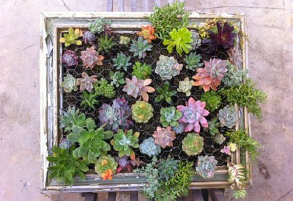 How to Make a Succulent Frame