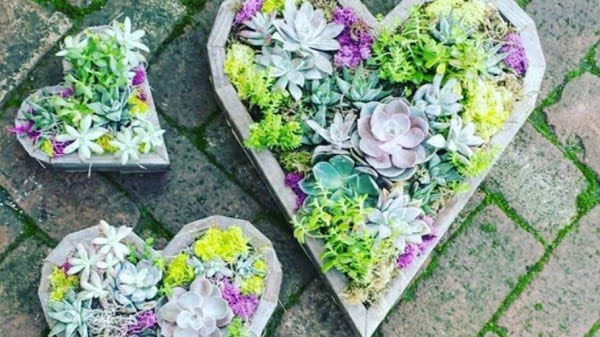 How To Make A DIY Succulent Heart Planter