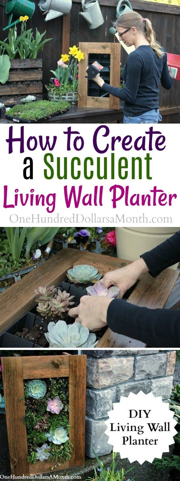DIY Sedum and Succulent Living Wall Planter