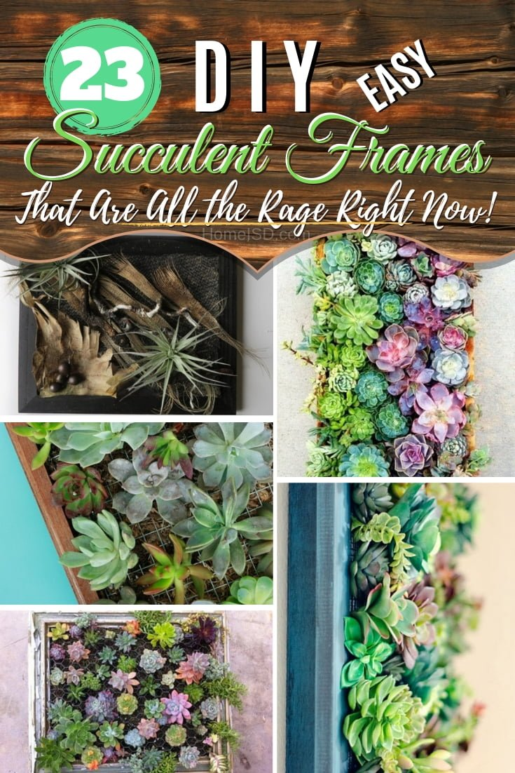 Create a decor accent that is all the rage right now - make a #DIY succulent frame for wall decor. Great ideas! #DIY #succulentwall #succulentframe #homedecor #walldecor