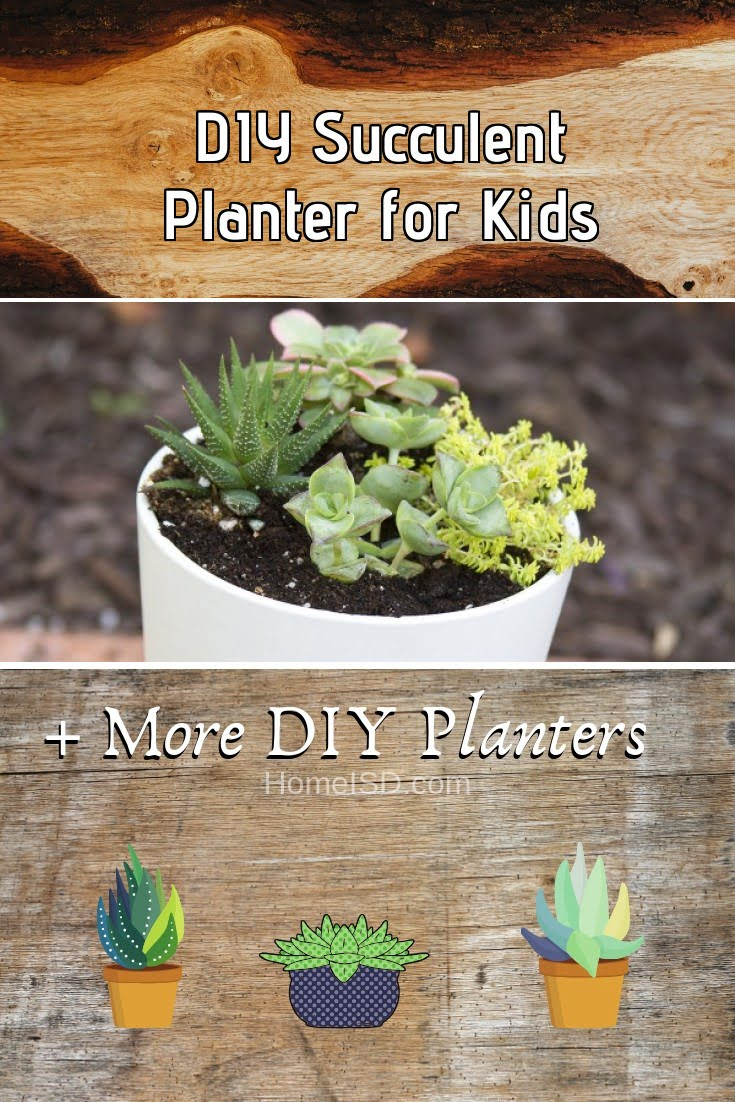 DIY Succulent Planter for Kids