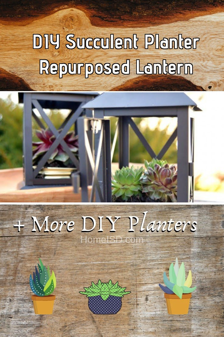 DIY Succulent Planter Repurposed Lantern