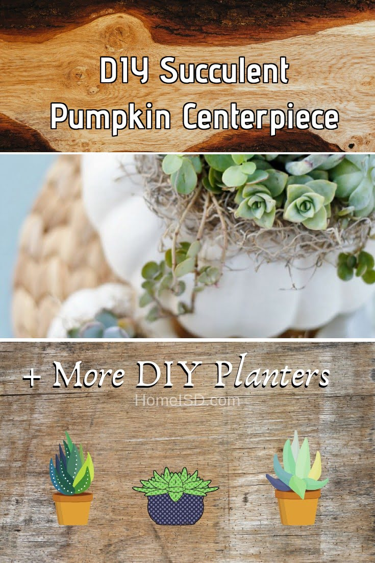 DIY Succulent Pumpkin Centerpiece