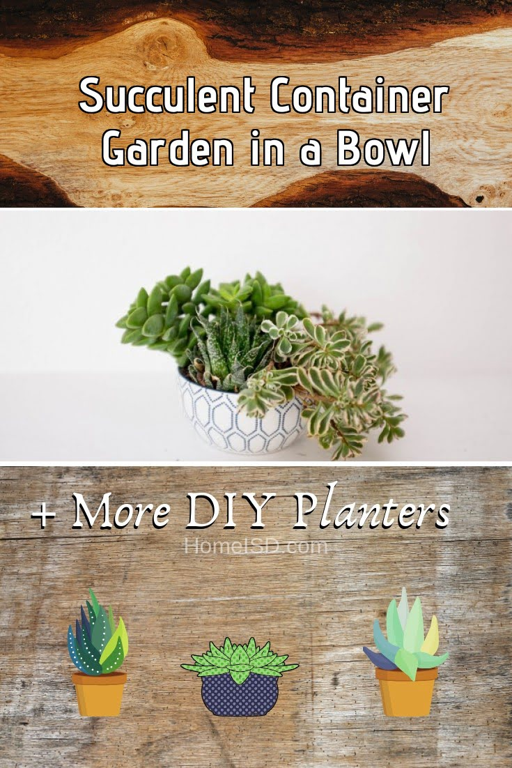 Succulent Container Garden in a Bowl