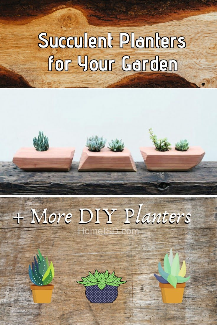 Succulent Planters for Your Garden