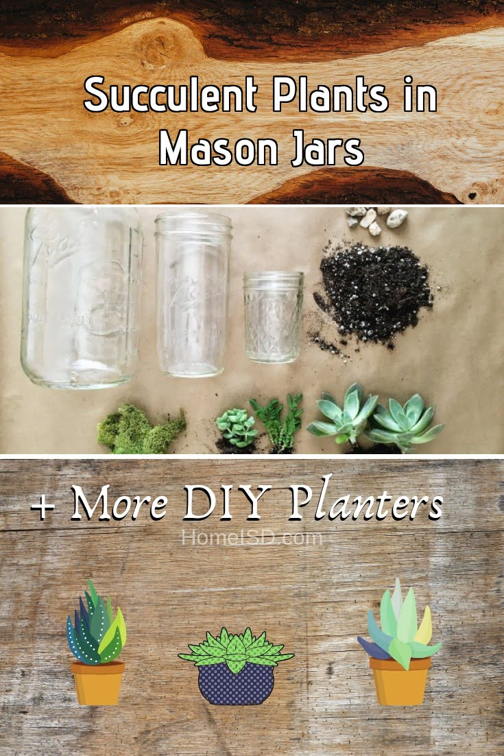 Succulent Plants in Mason Jars