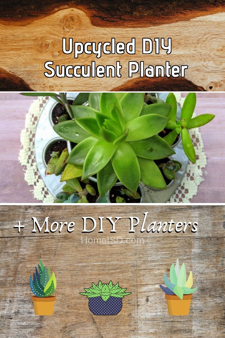 Upcycled DIY Succulent Planter