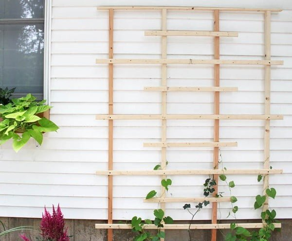 20 Easy DIY Trellis Projects to Really Prop Up Your Garden
