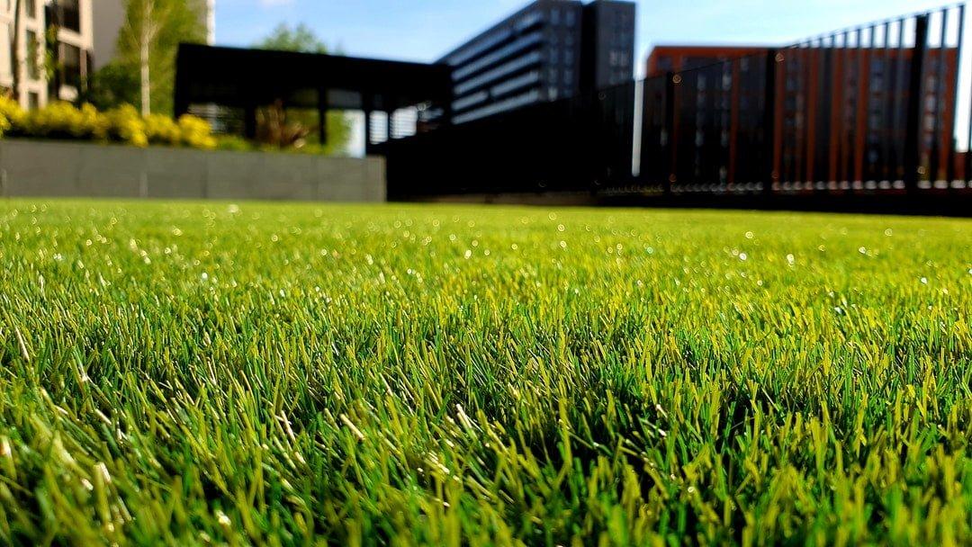 mowed lawn grass