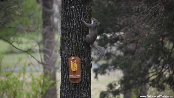DIY Project: Build Your Own Basic Squirrel Feeder
