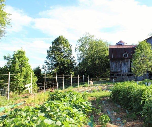 Reclamied Garden Fence