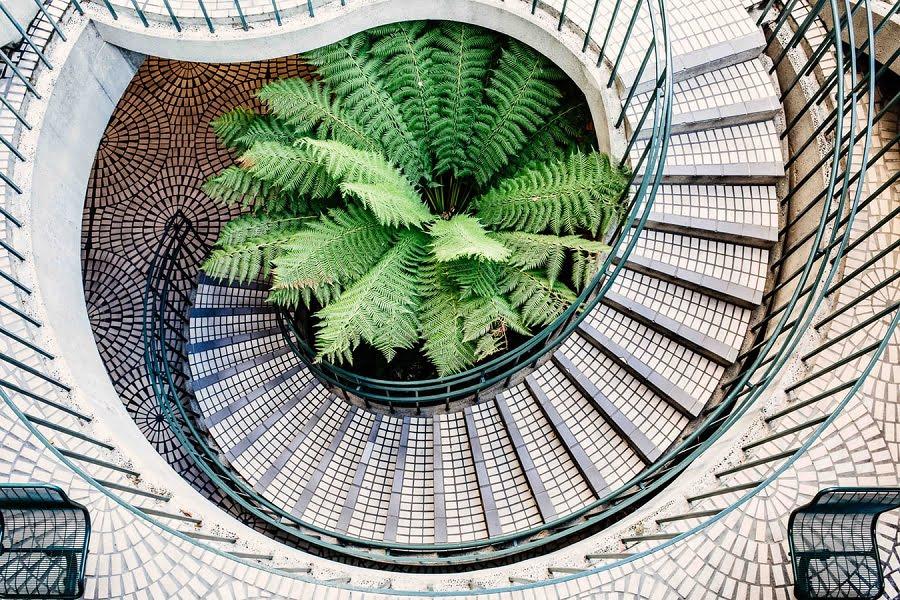 staircase fern