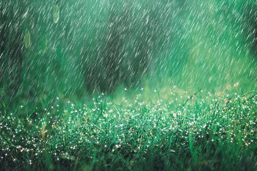 how much rain is too much after fertilizing