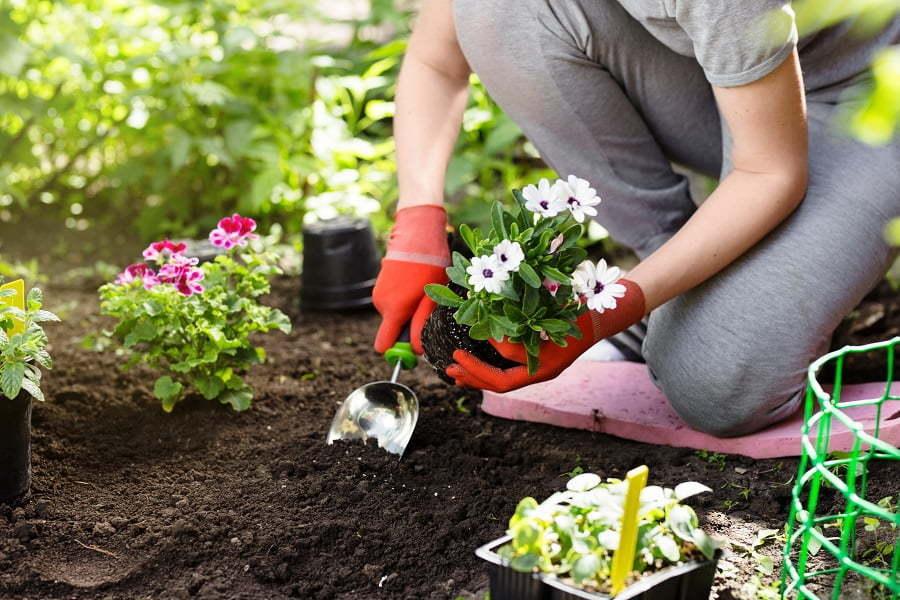 garden planting in soil