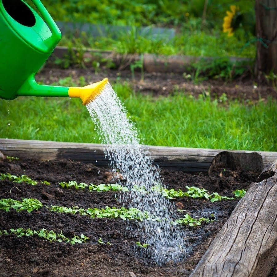 garden watering drainage
