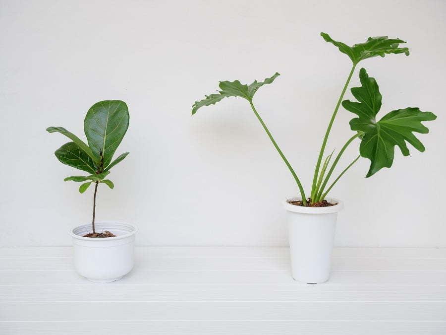 fake plants look real